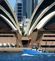 Aussie8