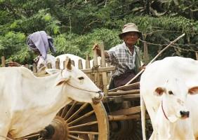 Birmania4