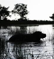 Botswana48