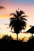 Tahiti18